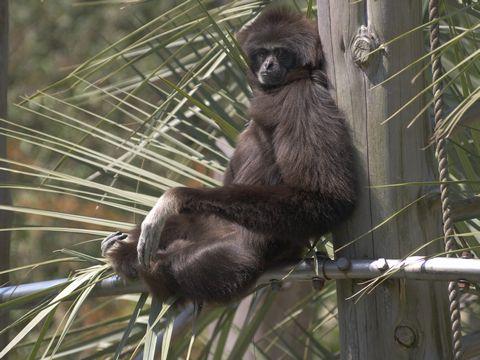 時々この動物公園に来るが、はじめて此奴の写真を撮った気がした、いつも小さい (^^;